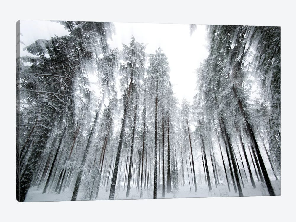 Trees In Motion by Andreas Stridsberg 1-piece Canvas Art