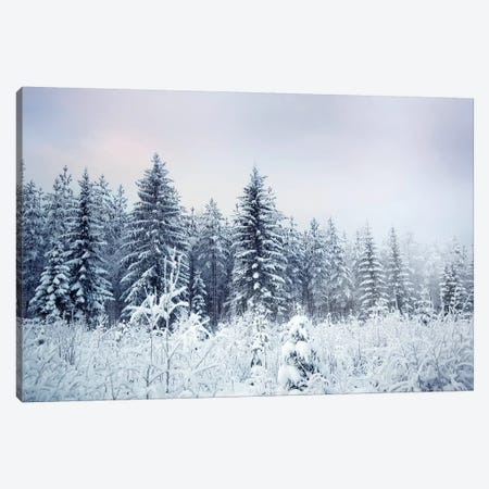 Where Christmas Trees Are Born Canvas Print #STR202} by Andreas Stridsberg Canvas Wall Art