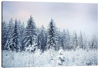 Where Christmas Trees Are Born Canvas Art Print