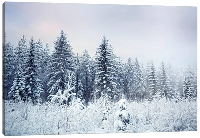 Where Christmas Trees Are Born Canvas Art Print