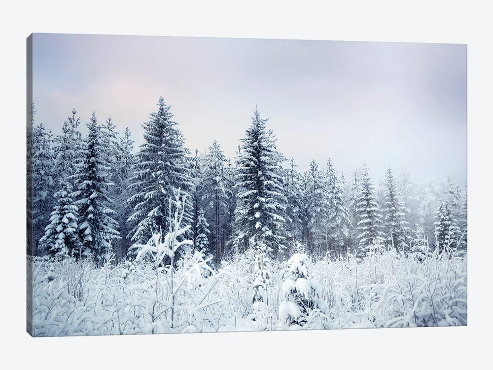 Where Christmas Trees Are Born by Andreas Stridsberg 1-piece Canvas Wall Art