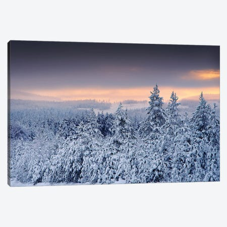 White Forest Canvas Print #STR203} by Andreas Stridsberg Canvas Art