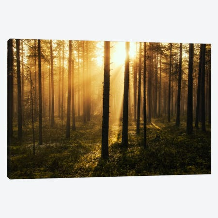 Forest Of Light Canvas Print #STR21} by Andreas Stridsberg Canvas Art Print