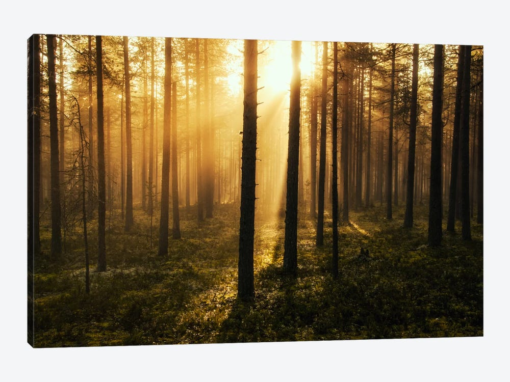 Forest Of Light by Andreas Stridsberg 1-piece Canvas Print
