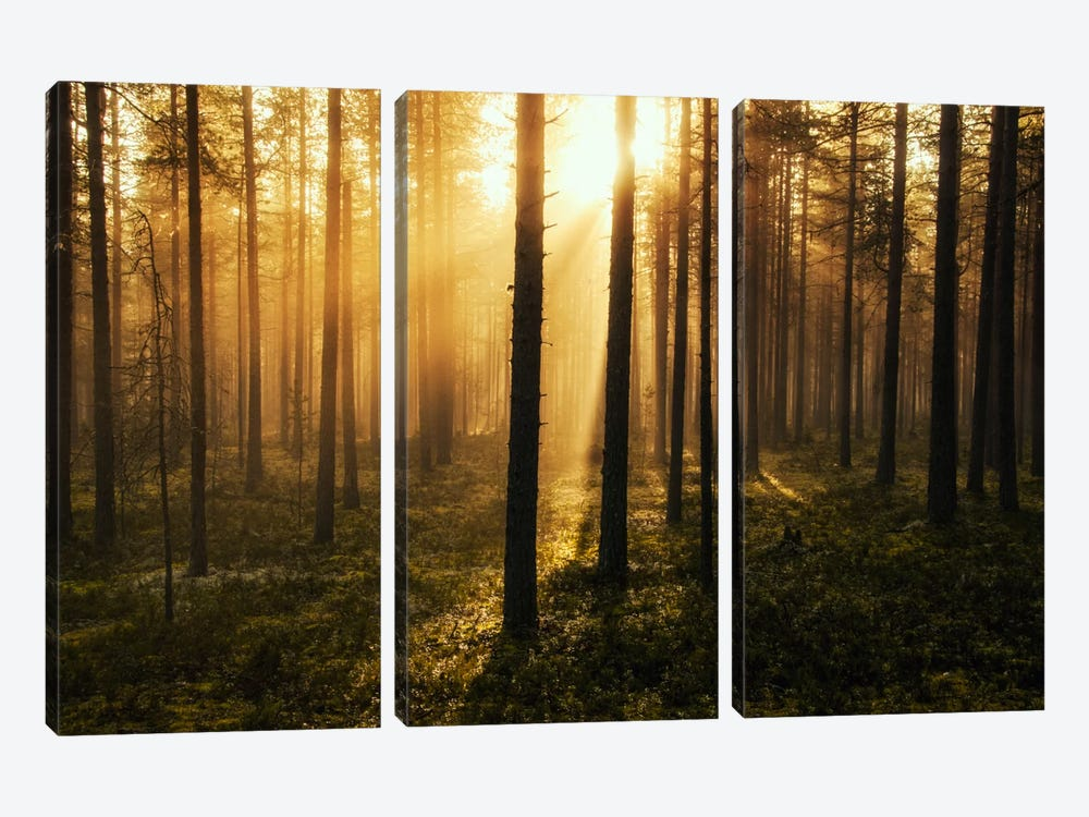 Forest Of Light 3-piece Canvas Art Print