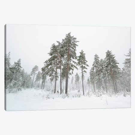First Snow Canvas Print #STR224} by Andreas Stridsberg Canvas Print