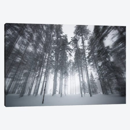 Winter Light Canvas Print #STR225} by Andreas Stridsberg Canvas Print