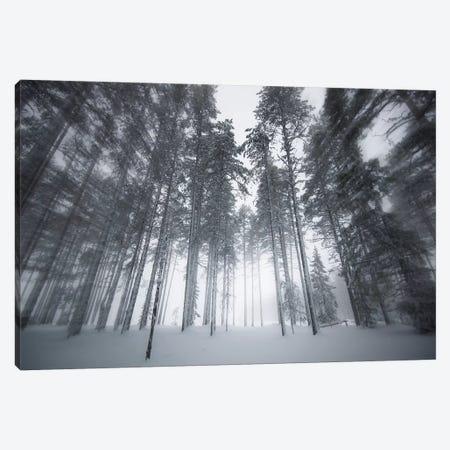 Winter Light Canvas Print #STR225} by Andreas Stridsberg Canvas Print