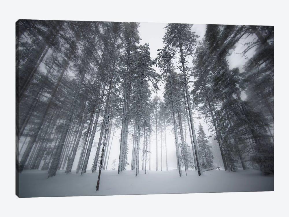 Winter Light by Andreas Stridsberg 1-piece Canvas Art Print