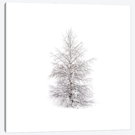Winters Birch Canvas Print #STR229} by Andreas Stridsberg Canvas Wall Art