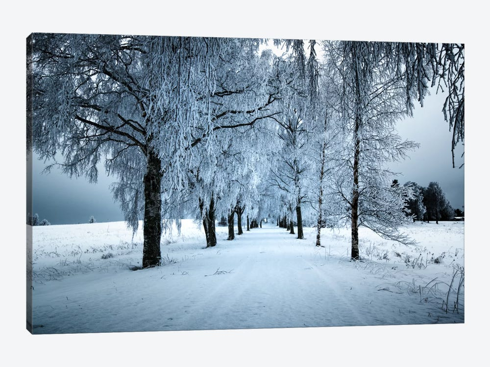 Frozen Avenue by Andreas Stridsberg 1-piece Canvas Artwork