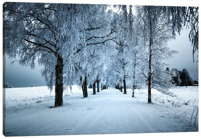 Frozen Avenue Canvas Art Print