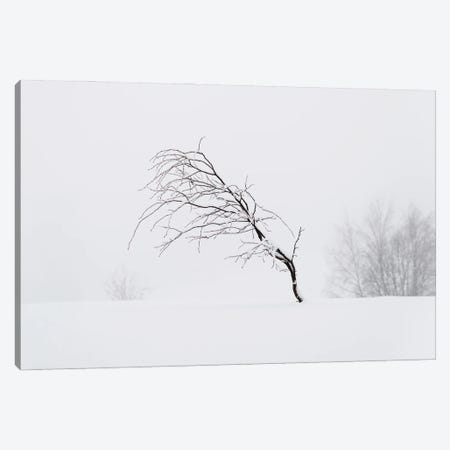 Windswept Canvas Print #STR232} by Andreas Stridsberg Art Print