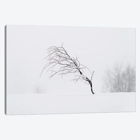 Windswept Canvas Print #STR232} by Andreas Stridsberg Art Print
