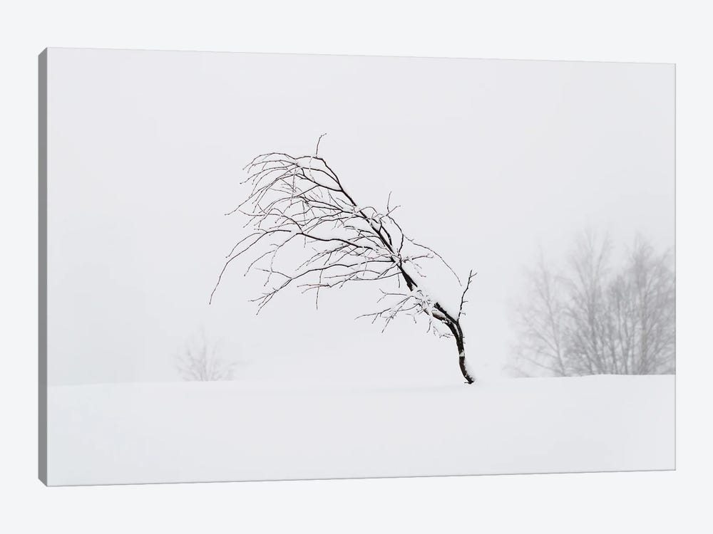 Windswept by Andreas Stridsberg 1-piece Canvas Art Print