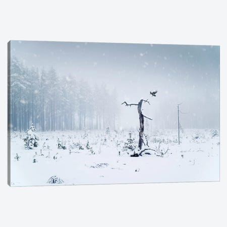 The Crow Canvas Print #STR236} by Andreas Stridsberg Canvas Art