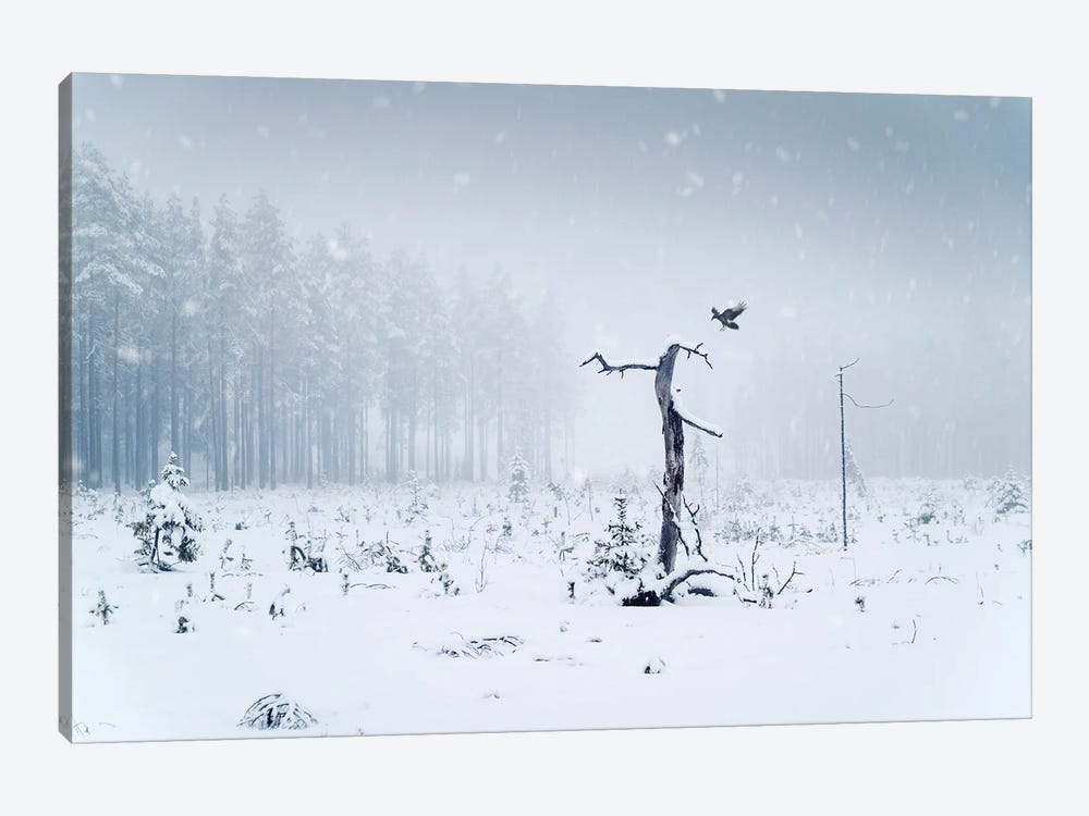 The Crow by Andreas Stridsberg 1-piece Canvas Art Print