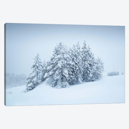 Snowy Grove Canvas Print #STR237} by Andreas Stridsberg Canvas Art