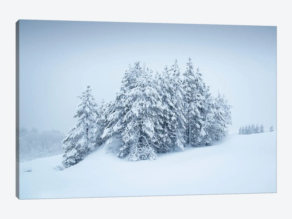 Snowy Grove by Andreas Stridsberg 1-piece Canvas Artwork