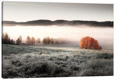 Frozen Meadow Canvas Print #STR23