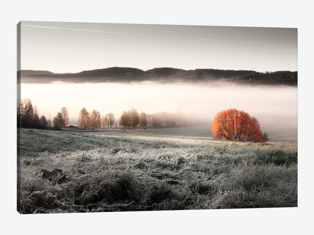 Frozen Meadow by Andreas Stridsberg 1-piece Canvas Art Print