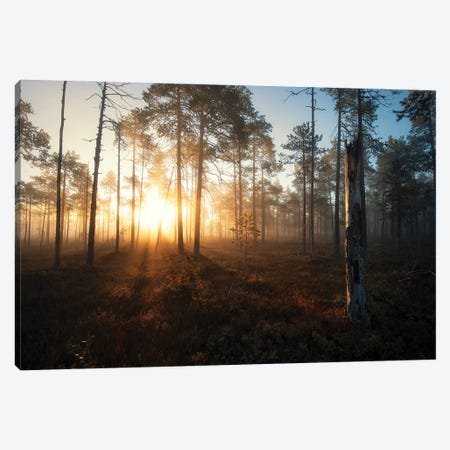 Morning Glow Canvas Print #STR245} by Andreas Stridsberg Canvas Print