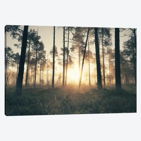 The Secret Forest Canvas Print #STR249} by Andreas Stridsberg Canvas Wall Art