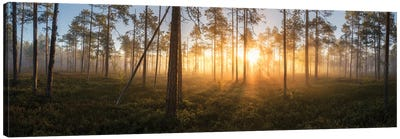 Panorama Of Silence Canvas Art Print