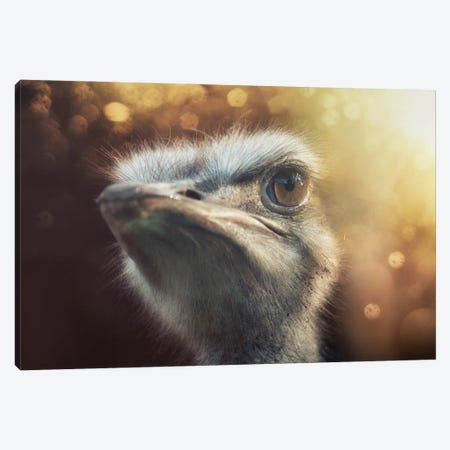 Ostrich II Canvas Print #STR252} by Andreas Stridsberg Canvas Print