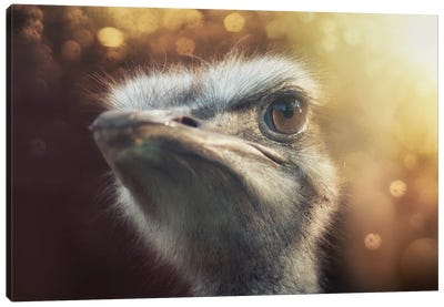 Ostrich II Canvas Art Print