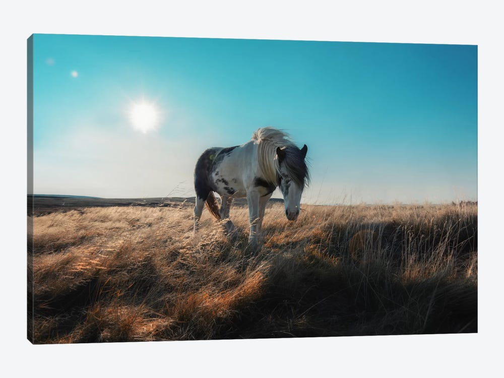 Grazeful by Andreas Stridsberg 1-piece Canvas Print