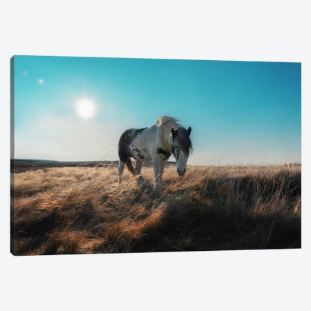 Grazeful Canvas Print #STR25} by Andreas Stridsberg Canvas Artwork