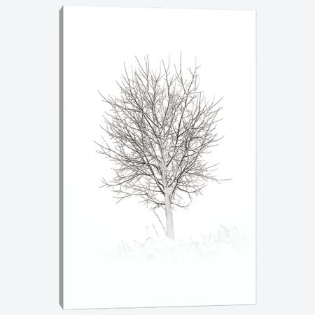 Simplicity Canvas Print #STR262} by Andreas Stridsberg Canvas Artwork