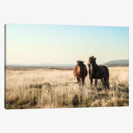 Morning Graze Canvas Print #STR38} by Andreas Stridsberg Canvas Artwork