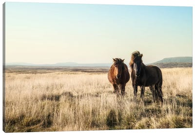 Morning Graze Canvas Art Print