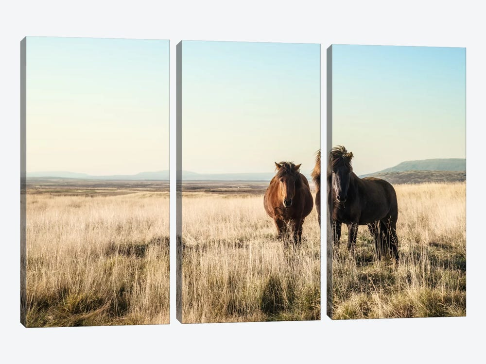 Morning Graze by Andreas Stridsberg 3-piece Art Print