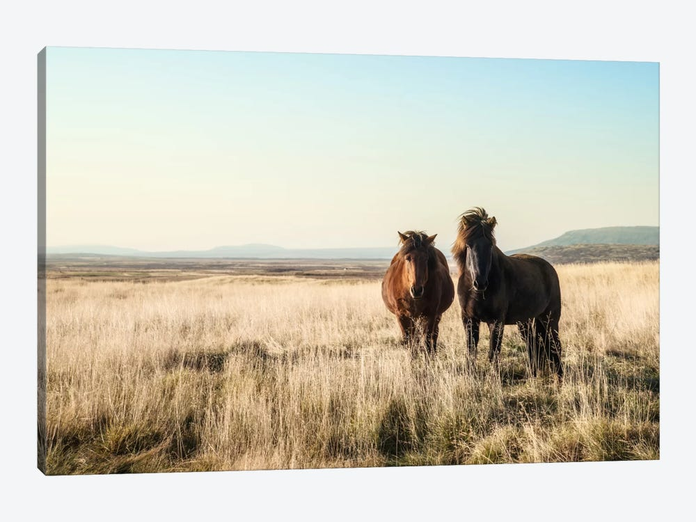 Morning Graze by Andreas Stridsberg 1-piece Canvas Print