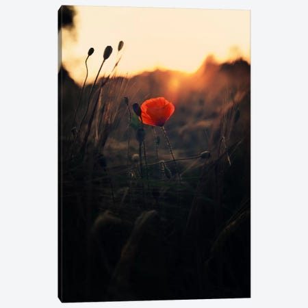 Poppy Canvas Print #STR45} by Andreas Stridsberg Canvas Art