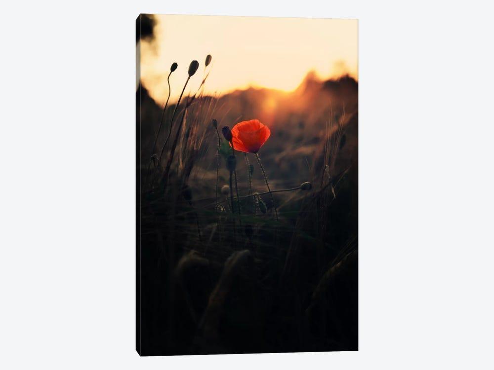 Poppy by Andreas Stridsberg 1-piece Canvas Art Print