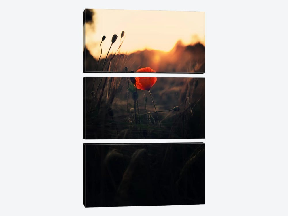 Poppy by Andreas Stridsberg 3-piece Art Print