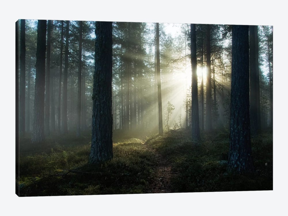 Shining Through by Andreas Stridsberg 1-piece Canvas Print