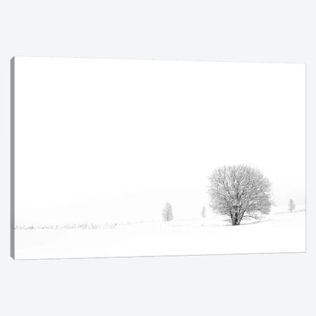Shrouded In Snow Canvas Print #STR53} by Andreas Stridsberg Canvas Artwork