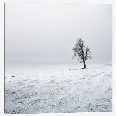 Silence Canvas Print #STR54} by Andreas Stridsberg Canvas Art Print