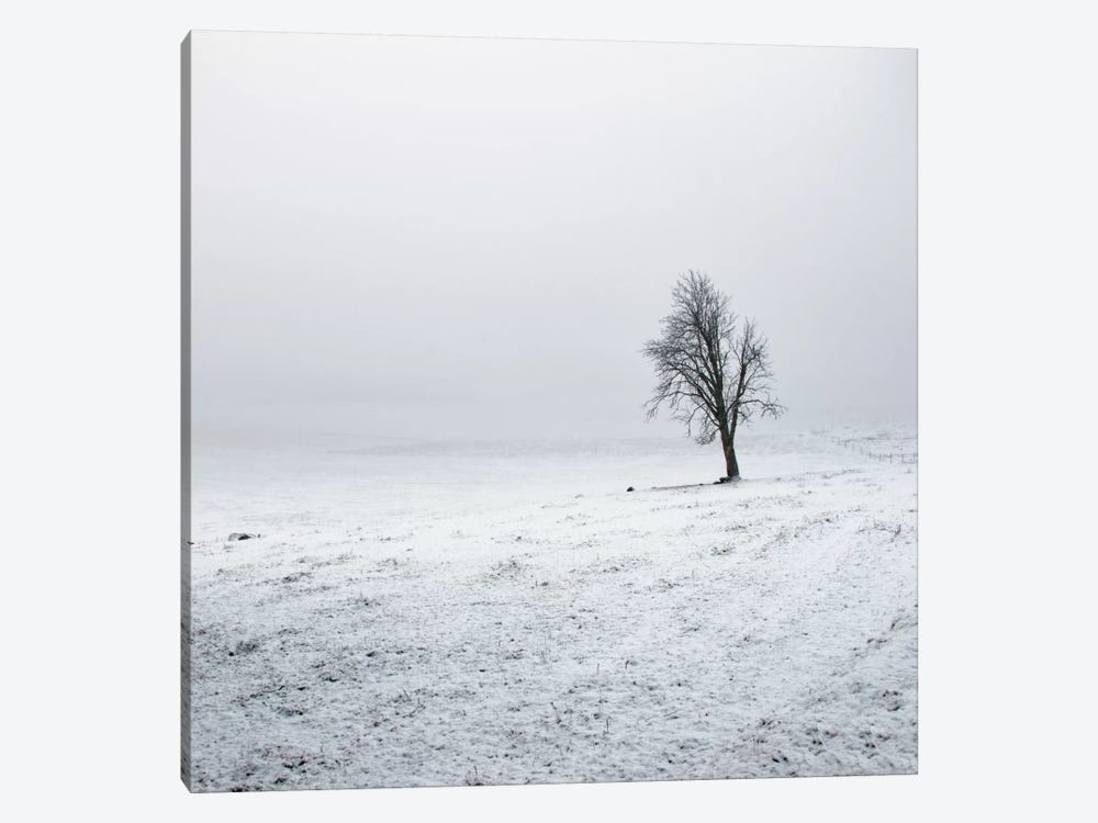 Silence by Andreas Stridsberg 1-piece Canvas Print