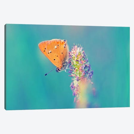 Small Wonders 3-Piece Canvas #STR56} by Andreas Stridsberg Canvas Print