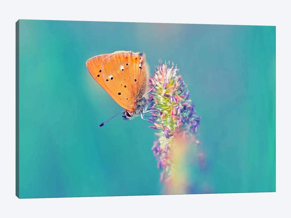 Small Wonders by Andreas Stridsberg 1-piece Canvas Print
