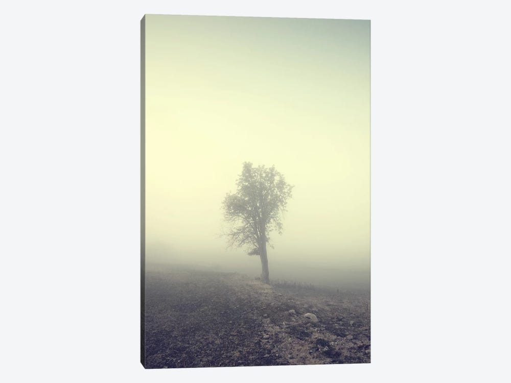 Solitude by Andreas Stridsberg 1-piece Canvas Wall Art