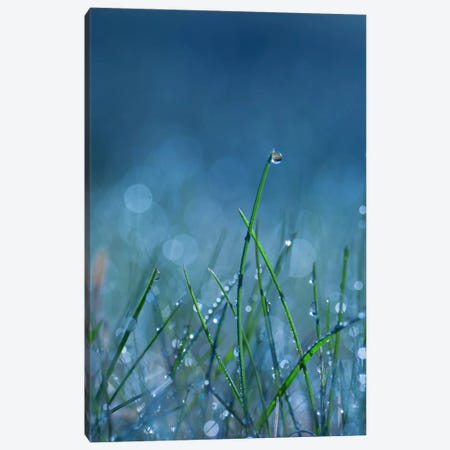 Blue Dew Canvas Print #STR5} by Andreas Stridsberg Canvas Wall Art