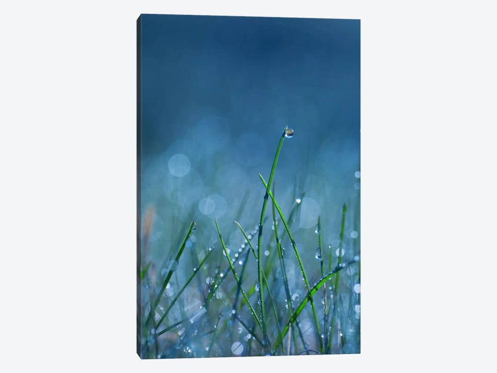 Blue Dew by Andreas Stridsberg 1-piece Canvas Wall Art