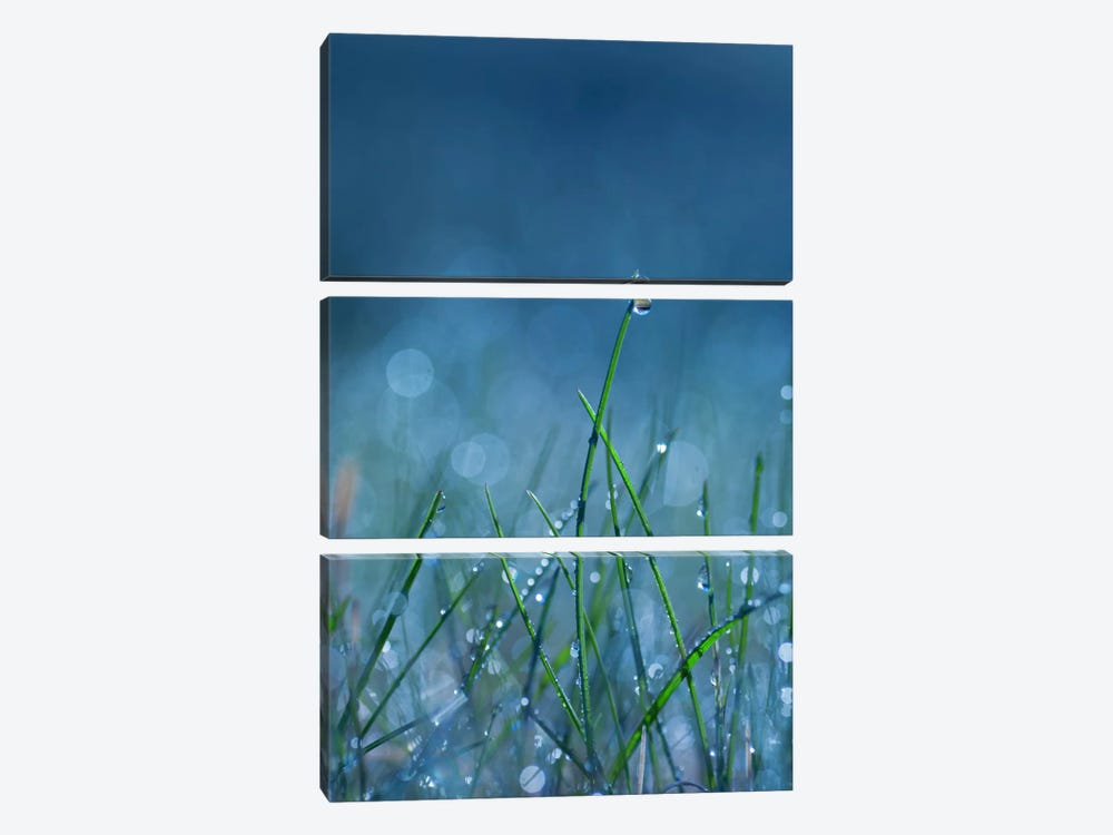 Blue Dew by Andreas Stridsberg 3-piece Canvas Artwork